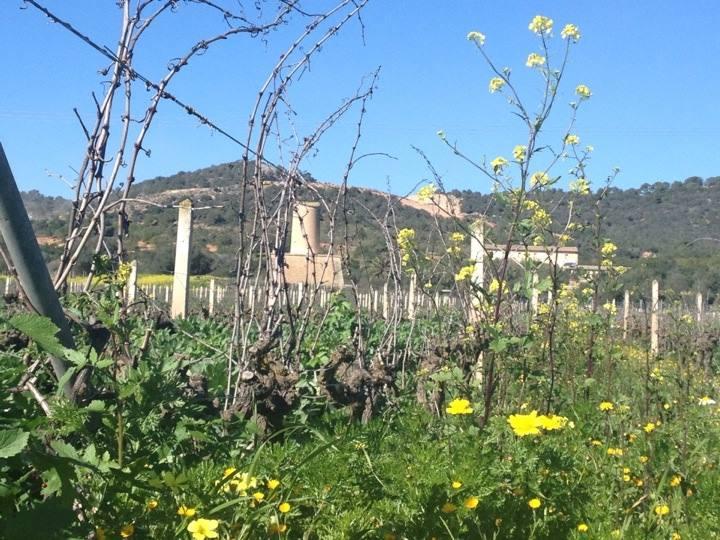 Vinfälten i Porreres
